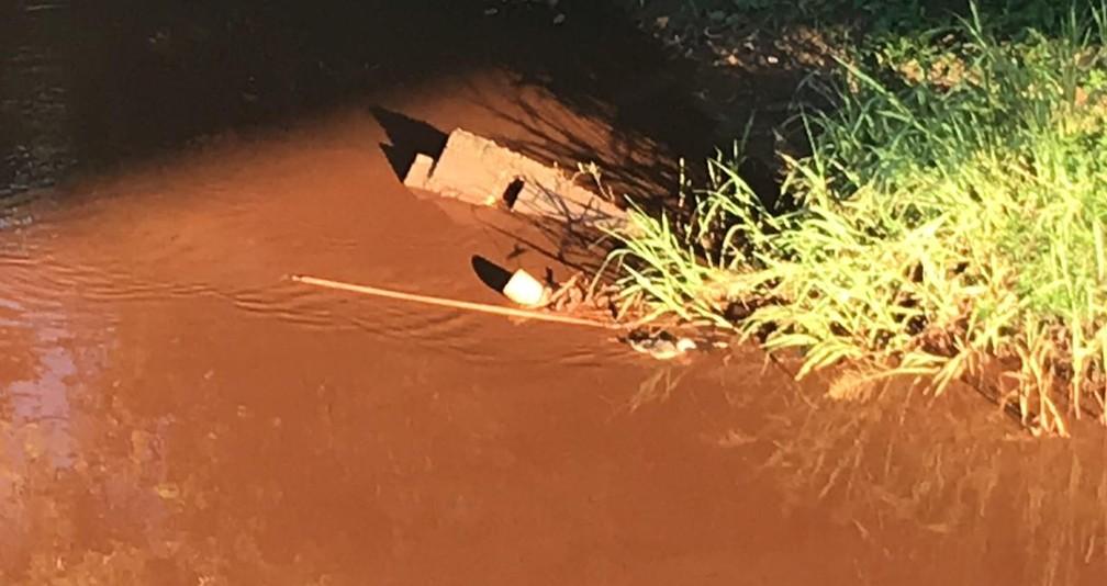 Pato nada em meio à lama no Rio Paraopeba na manhã desta segunda — Foto: G1