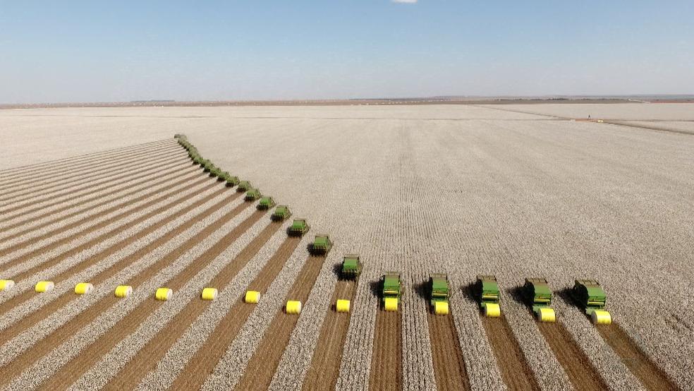 Força-tarefa reúne quase 30 colheitadeiras na colheita do algodão em fazenda de Sapezal (Foto: Reprodução/TVCA)