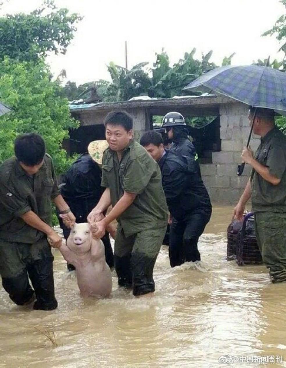 Foto de porco 'sorridente' durante resgate na China viraliza (Foto: Weibo/reprodução)