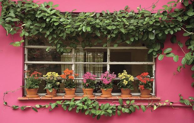 O vitrô da cozinha não é mais o mesmo desde que a paisagista Olga Wehba incluiu a trepadeira jasmim-de-madagáscar ao longo da fachada. A espécie foi conduzida por fios de náilon. Sobre o parapeito, os vasinhos de barro trazem calanchoês em tons de rosa, amarelo e vermelho (Foto: Arquivo Casa e Jardim)