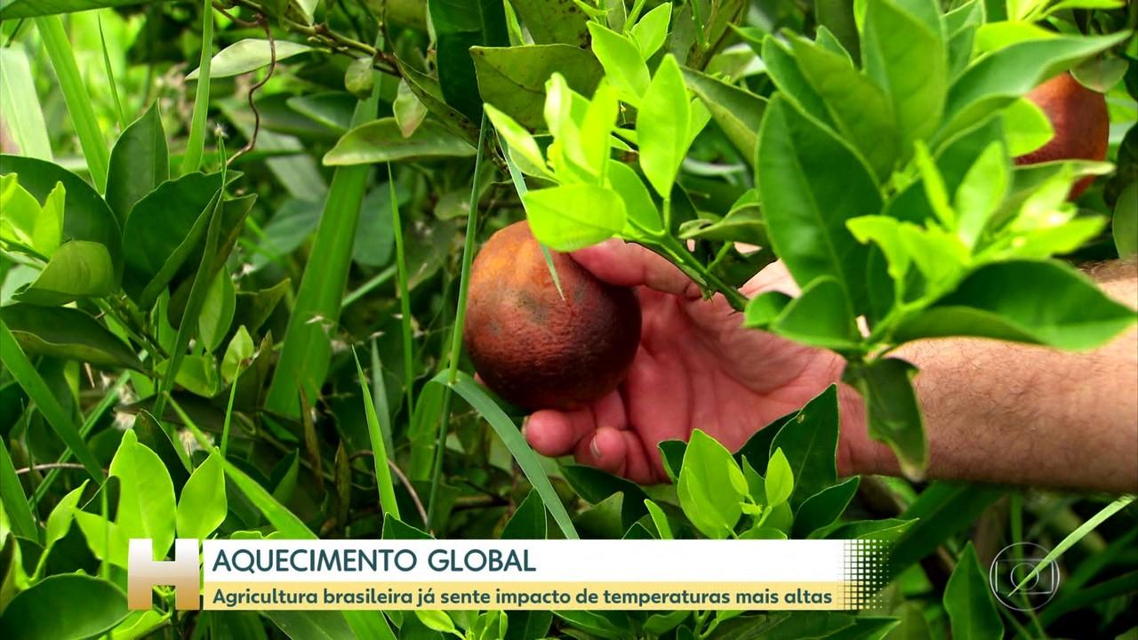 Aquecimento global tem impacto sobre agricultura brasileira