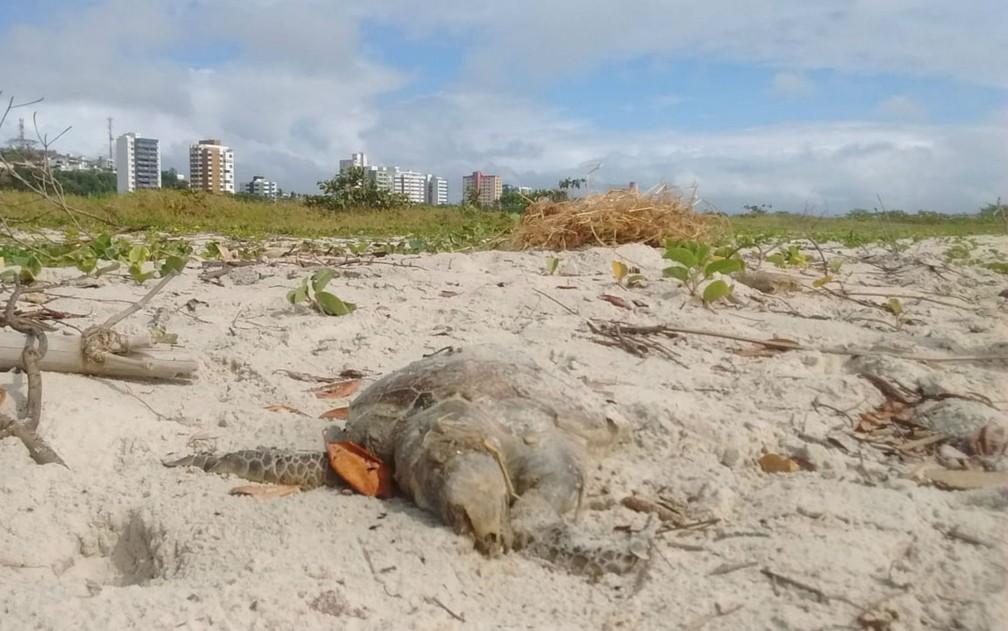 Animal é a 107ª tartaruga marinha encontrada morta na faixa litorânea entre Ilhéus e Itacaré, também sul, desde janeiro — Foto: Projeto (A)mar