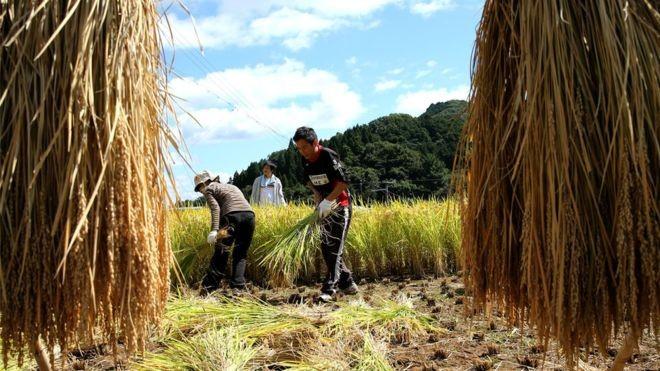 Medida ajudaria a aliviar problema de falta de mão-de-obra em setores como a agricultura (Foto: GETTY IMAGES/via BBC News Brasil)