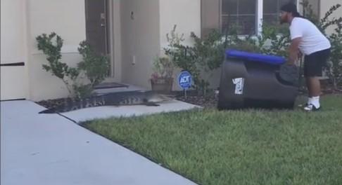 Nos EUA, homem captura jacaré usando uma lata de lixo: