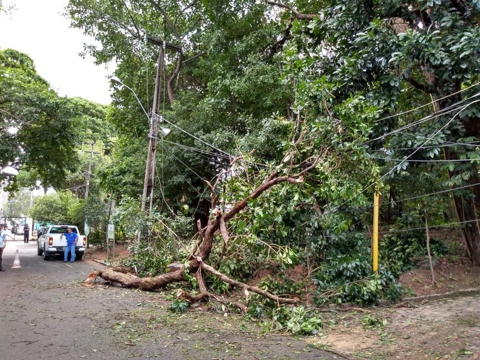 Árvore caiu sobre fios e interrompeu energia elétrica que alimenta bombas que distribuem água na Zona Leste de Natal — Foto: Divulgação/Caern