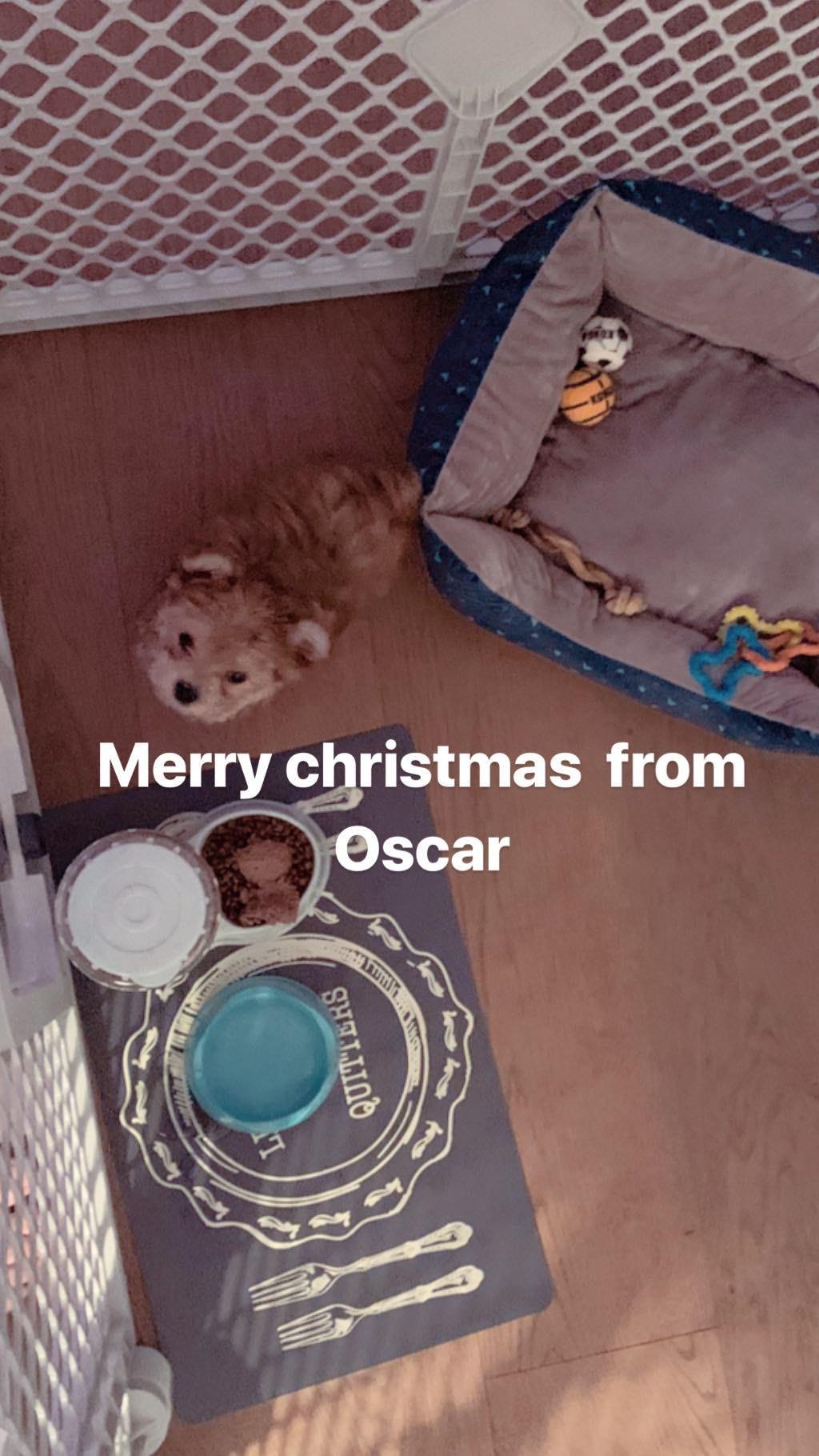 Oscar (Foto: Reprodução Instagram)