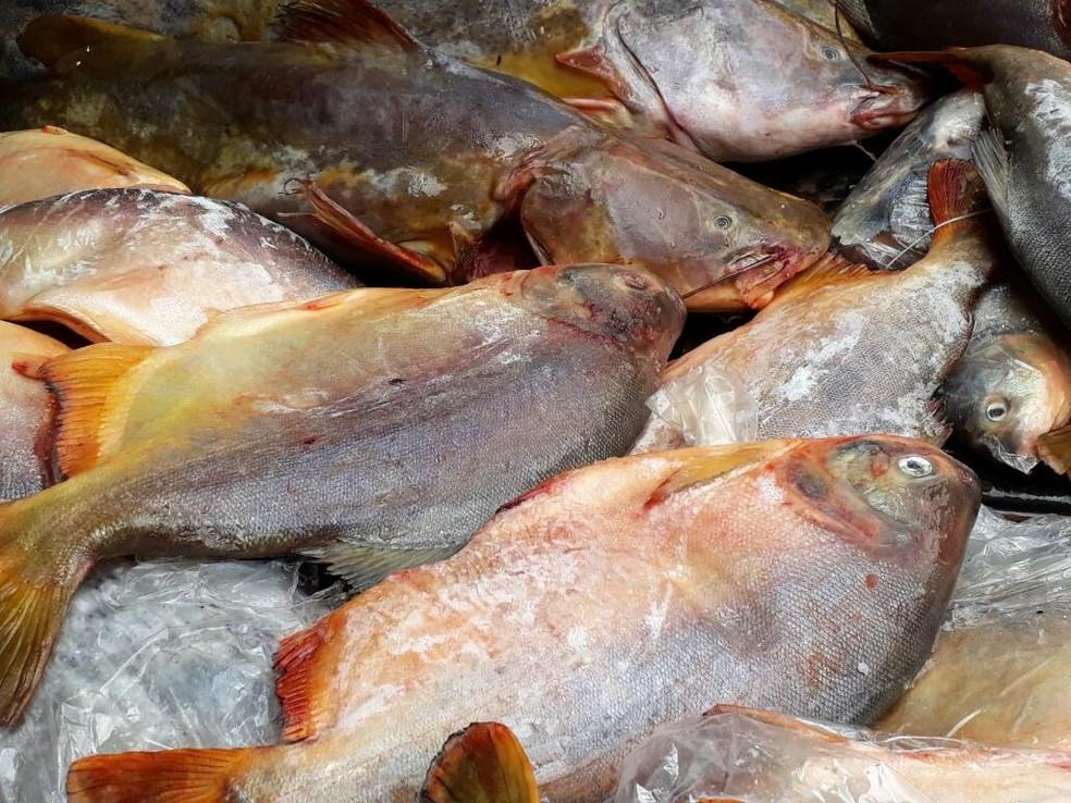 Pescado apreendido  — Foto: Sema-MT/Divulgação
