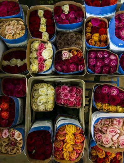 como-fazer-as-rosas-durarem-mais (Foto: Valdemir Cunha/Ed. Globo)