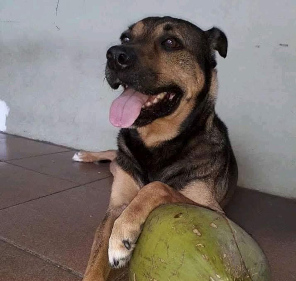 Cachorro abandonado é resgatado por moradora de Jundiaí  — Foto: Juliana Romero/Arquivo Pessoal