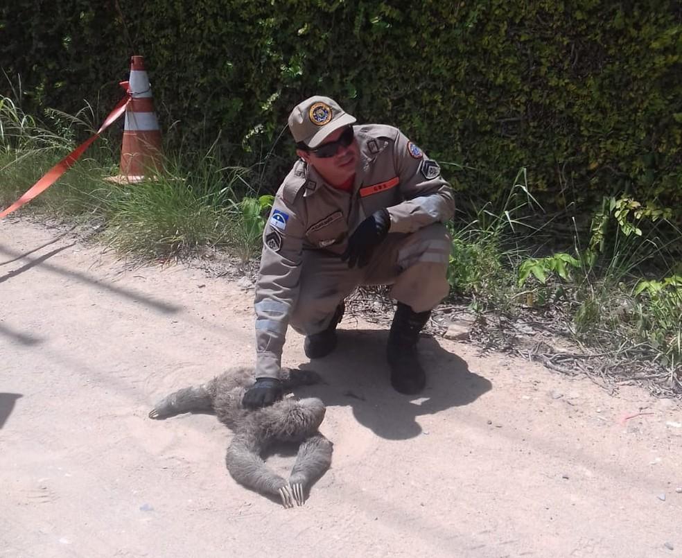 Bombeiros trabalharam no resgate do animal — Foto: Corpo de Bombeiros/Divulgação