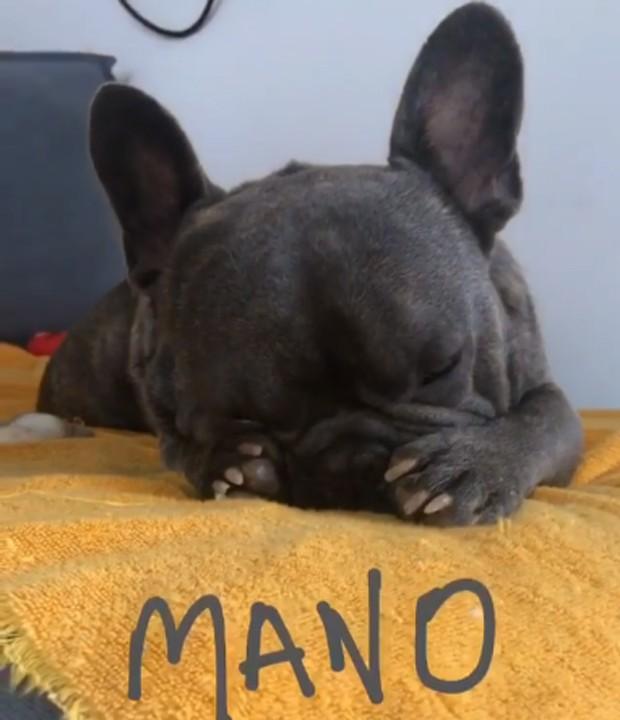 Dorminhoco: Mano, cçaozinho de Gianecchini, durante a soneca (Foto: Reprodução/Instagram)
