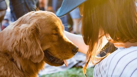 Adoção responsável: saiba como garantir o bem estar ideal para seu pet