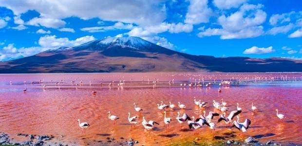 Laguna Colorada (Foto: Shutterstock/ Reprodução)