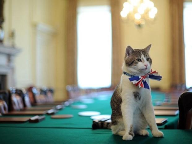 O gato Larry (Foto: AFP)