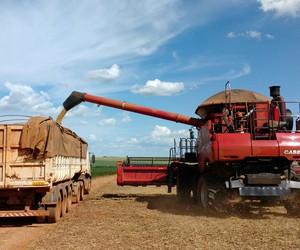 StoneX reduz projeção para soja e mantém para milho em 2020/21