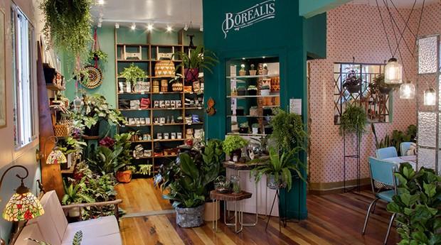 A Borealis oferece plantas e acessórios que facilitam o cultivo de áreas verdes entre moradores de grandes cidades  (Foto: Divulgação)