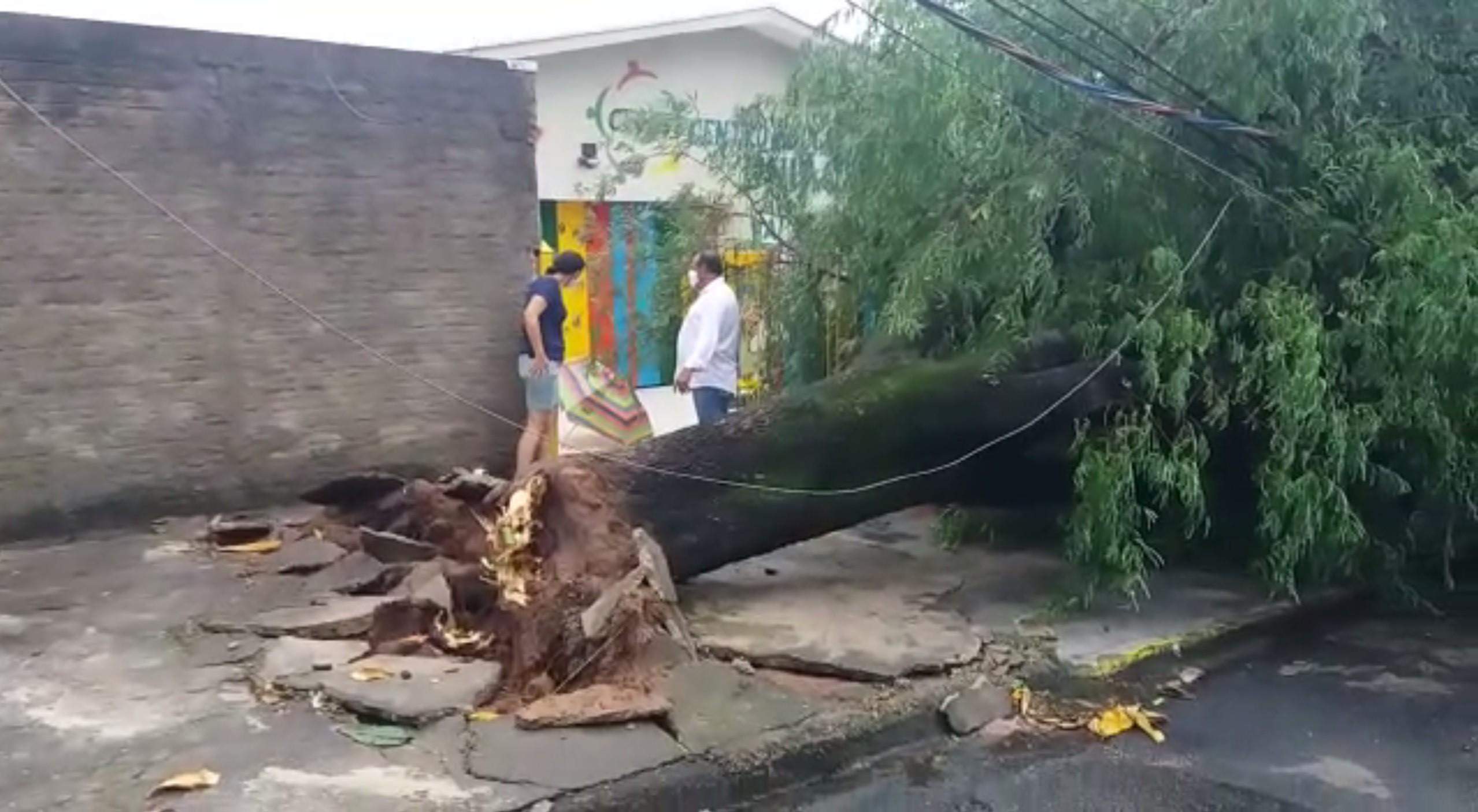 Chuva derruba árvores e causa pontos de alagamento em Campinas