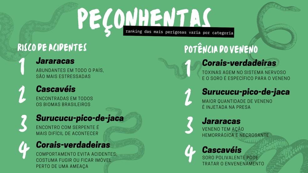 As jararacas são responsáveis por mais de 90% dos acidentes no Brasil; veneno da coral-verdadeira é mais potente — Foto: Arte/Giulia Bucheroni