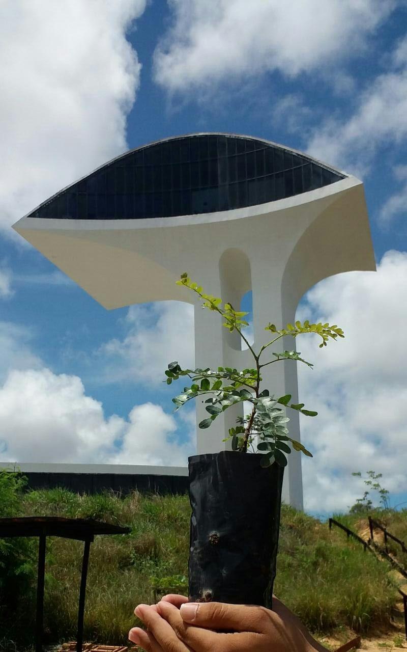 Parque da Cidade faz plantio de mudas em Zona de Proteção Ambiental degradada em Natal