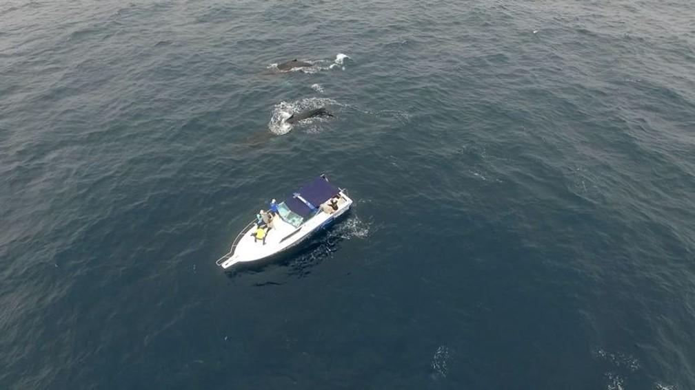 Baleias jubarte passando bem perto de embarcação — Foto: Reprodução/TV Gazeta
