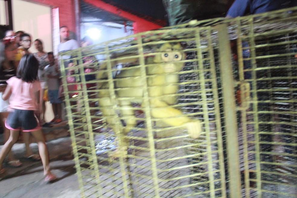 Macacos estão entre animais apreendidos — Foto: Rickardo Marques/G1 AM