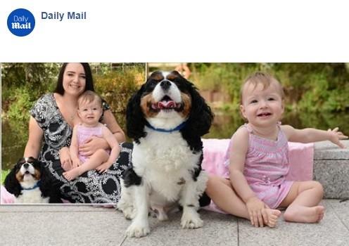 Louie, o cachorro da bisavó, salvou a vida da pequena Chloe, 1 ano (Foto: Reprodução/ Facebook)