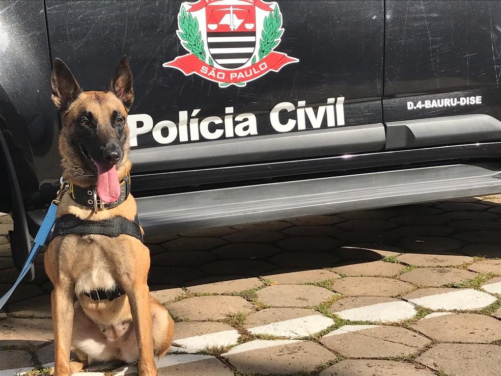 Cachorra Atena foi treinada para ajudar em operações em combate ao tráfico de drogas — Foto: Gabrielle Gabas/TV TEM