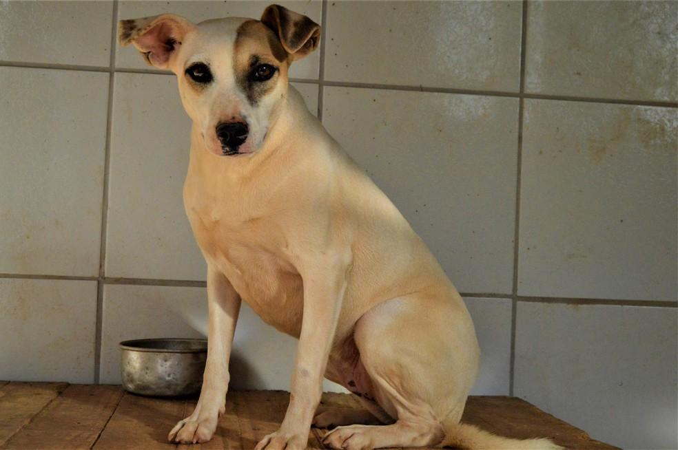 Quinze cães que foram encontrados em distritos destruídos por lama de rejeitos poderão ser adotados.  (Foto: Fundação Renova/Divulgação)