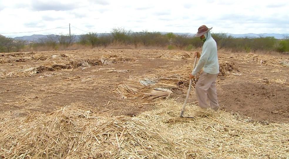 Agricultor Manoel Antônio, prepara terra para receber plantação quando chuvas começarem no RN. — Foto: Reprodução/Inter TV Costa Branca