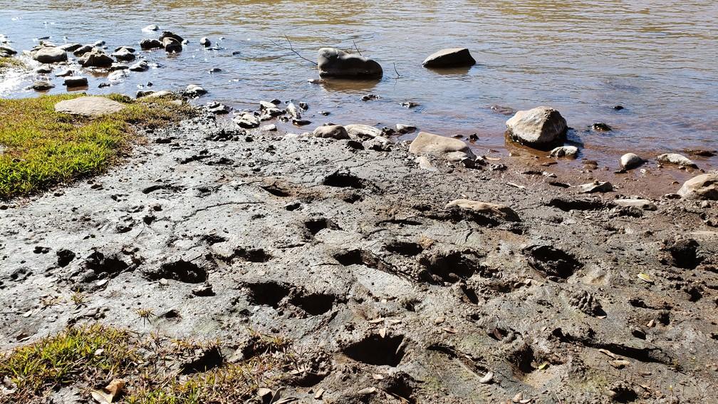Rejeito se acumula nas margens do Paraopeba, em São Joaquim de Bicas, na Grande BH — Foto: Raquel Freitas/G1