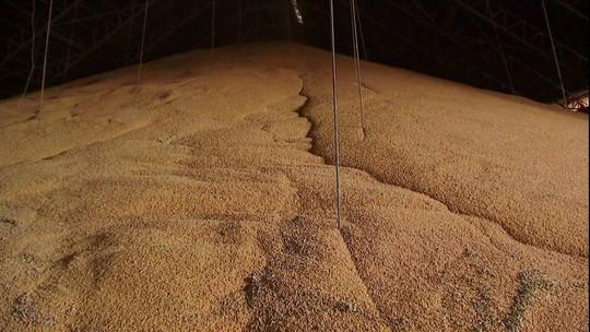 Estoque de soja impede recebimento da safra de milho em armazéns de MS