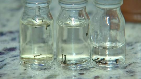 Levantamento aponta alto índice de infestação de Aedes aegypti em Buri