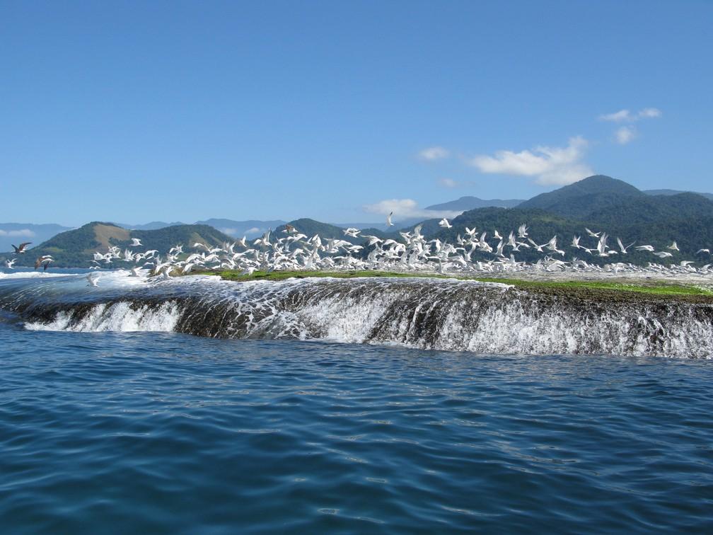 Rochedo na Esec de Tamoios, na Baía de Angra dos Reis — Foto: Adriana Gomes/ICMBIO/Acervo
