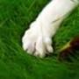 Papel de Parede: Cat Paw