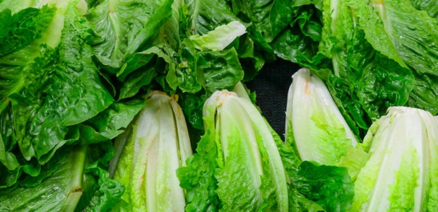 Group of fresh organically grown fresh romaine lettuce in the farmer market at Puyallup, Washington, USA. ; Shutterstock ID 279924581 (Foto: Shutterstock / Trong Nguyen)