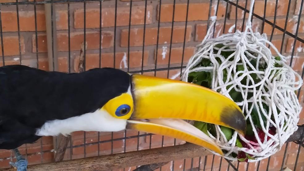 Ovos de Páscoa foram feitos com elementos naturais para os animais em Bauru — Foto: Prefeitura de Bauru/Divulgação
