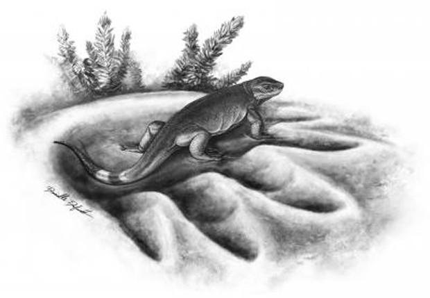 Concepção artística mostra Eocasea, o ancestral mais antigo dos herbívoros   (Foto: Danielle Dufault/Divulgação)