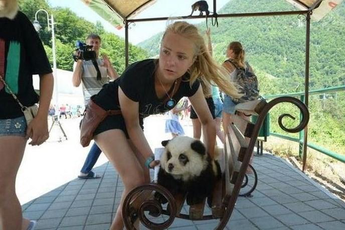 Turista com chow chow transformado em filhote de panda