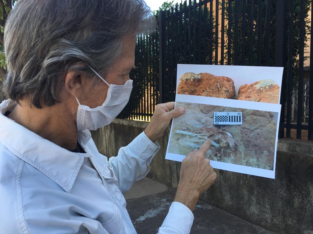 Museu de Paleontologia de Marília recebe fósseis de novas descobertas em Presidente Prudente