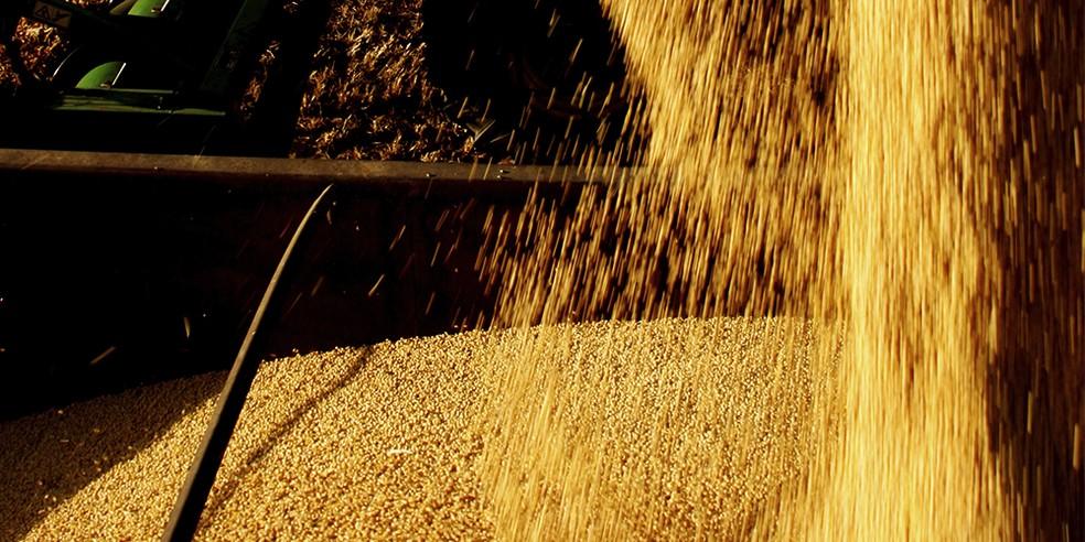 A fixação biológica de nitrogênio no plantio da soja gera uma economia de US$ 2 bilhões por ano com adubos químicos, diz Embrapa. — Foto: Divulgação/Ascom Seagri