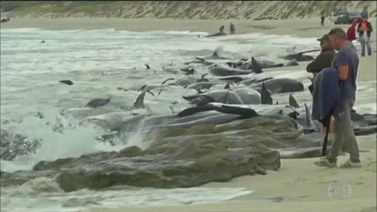 Biólogos tentam salvar baleias encalhadas na Austrália