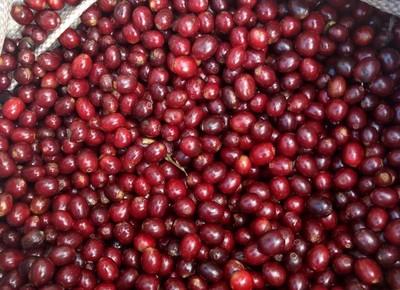 café-grão-especial-grao-cafe (Foto: Divulgação/Montesanto Tavares)