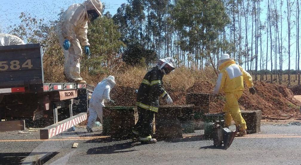 Apicultores da região e bombeiros recolheram as caixas de abelhas caídas na rodovia  (Foto: Arquivo pessoal)