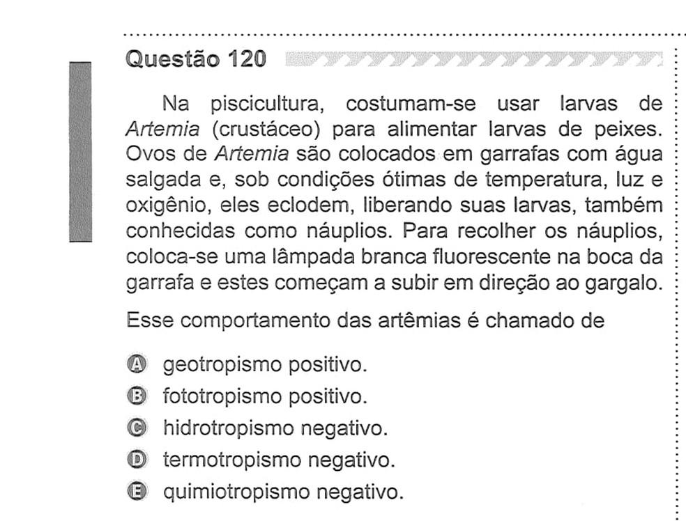 ENEM 2019 – Segundo dia de provas, perguntas do caderno CINZA — Foto: Reprodução/Inep