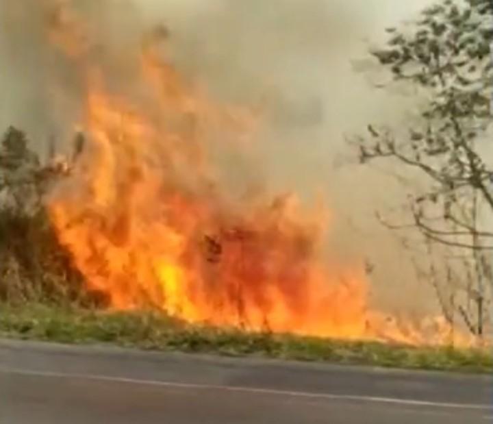 Novo foco de incêndio é registrado em área de vegetação na Chapada Diamantina