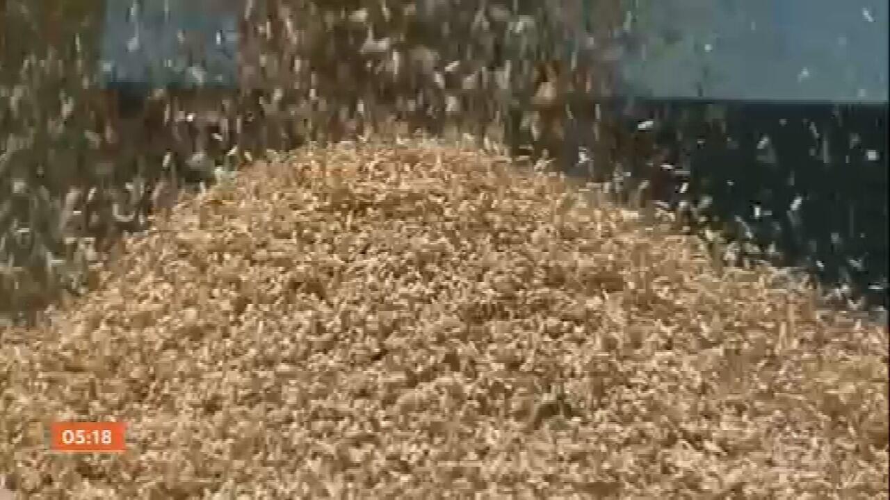 Começa a colheita do arroz em SC; safra deve ser menor que a de 2020