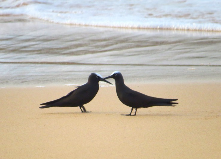 Inscrições são abertas para capacitação gratuita sobre observação de aves em Noronha