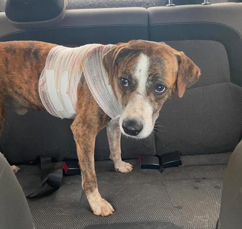 Cachorro foi resgatado e levado para atendimento em clínica veterinária — Foto: Cedida