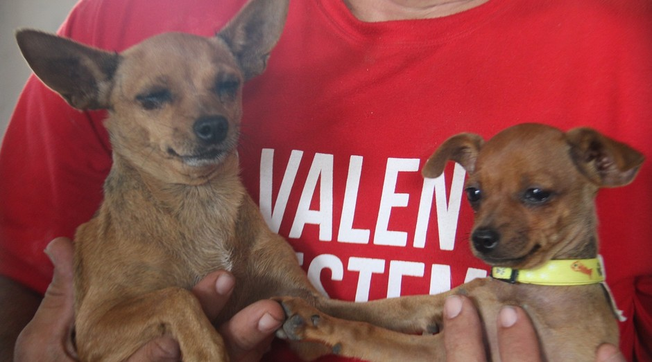 cães brumadinho (Foto: Divulgação/CRMV-MG)