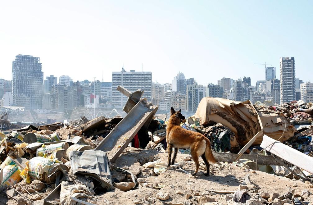 Cão da equipe de resgate francesa procura sexta-feira (7) sobreviventes no local da explosão em Beirute, no Líbano — Foto:  Thibault Camu/AP